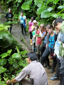 Roberto, our guide, explains the medical uses of this giant-leafed plant, as well as how to roll the leaves into the shape of a 'gun' as part of our tour through the forest