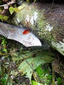 Arból de Sangre del Drago (Drago Blood Tree) bleeding onto Roberto's (our guide's) machete