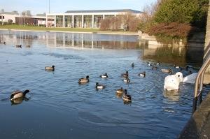 UCD Lake (1)