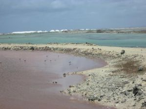 Two saliñas on the Cargill property. The rosy-pink color indicates a higher salinity, which means the salt is almost ready to be harvested.