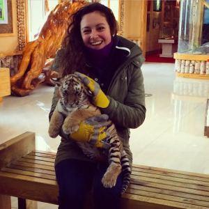 Siberian baby tiger