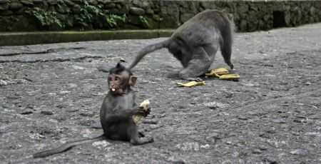 In the afternoon, we made our way to Monkey Forest. These little guys were quite entertaining, and everyone seemed to be giggling at their antics.