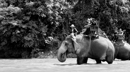 The last activity of the day was elephant riding at a local elephant conservatory. We took a bamboo raft to get there, passing many elephants on the way.