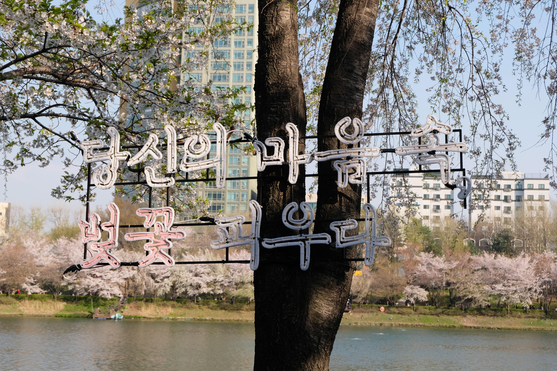 Cherry blossom festival sign